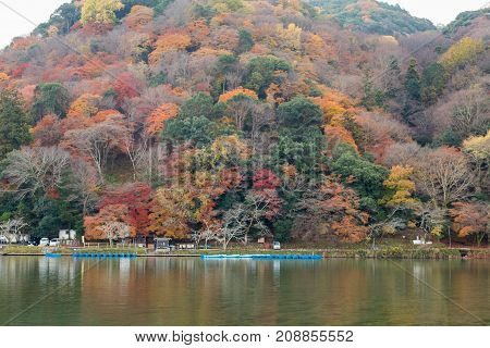 Multiple colour tree in mountain water front in Kyoto Japan during autumn season