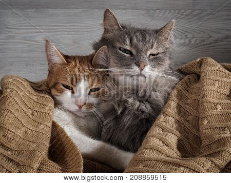 The tender relationship the two cats. The concept of love the comfort of home