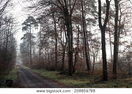 Ice cold and grey forests in the winter in middle europa