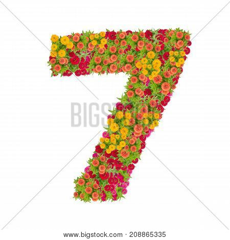 number 7 made from Zinnias flowers isolated on white background.Colorful zinnia flower put together in number seven shape with clipping path