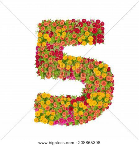 number 5 made from Zinnias flowers isolated on white background.Colorful zinnia flower put together in number five shape with clipping path