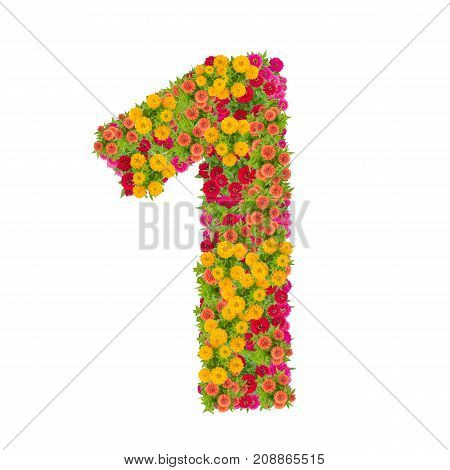 number 1 made from Zinnias flowers isolated on white background.Colorful zinnia flower put together in number one shape with clipping path