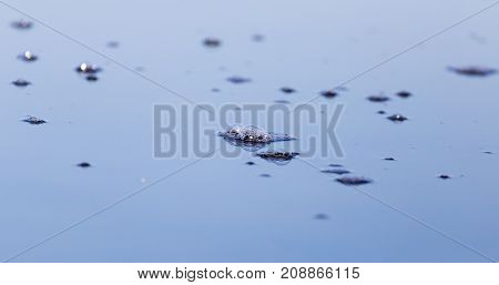 air bubbles on the surface of the water