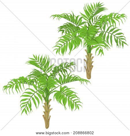 Young palm trees isolated on white background. Tropical plants with green fronds.