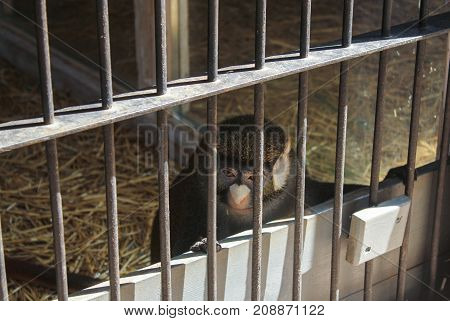 Yalta, Crimea - 11 July, Monkey in the cage, 11 July, 2017. Zoo and animals on the territory of the hotel Yalta Intourist.