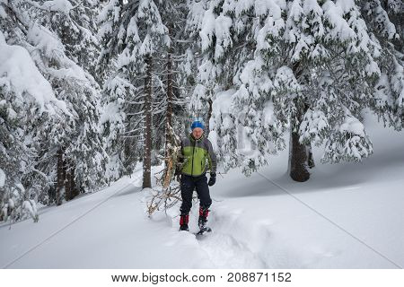Tired Traveler, In Snowshoes, Drags An Armful Of Firewood