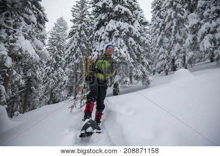 Happy Traveler, In Snowshoes, Drags An Armful Of Firewood