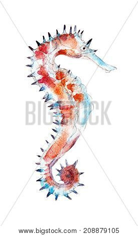 The seahorse watercolor illustration isolated on white background.