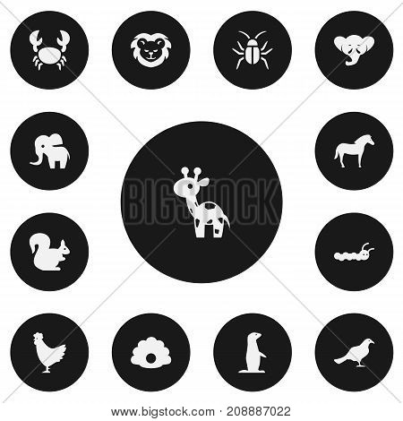 Set Of 13 Editable Zoology Icons. Includes Symbols Such As Proboscis, Wildcat, Cockroach And More
