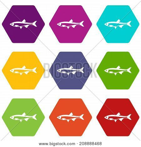Herring fish icon set many color hexahedron isolated on white vector illustration