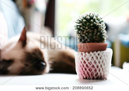 Cactus in a small pot and cat on white table