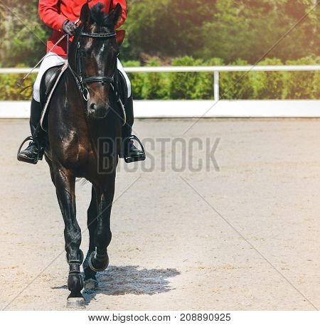 Bay dressage horse and rider in red jacket performing at show jumping competition. Equestrian sport background. Bay horse portrait full face during dressage competition. Copy space for your text.