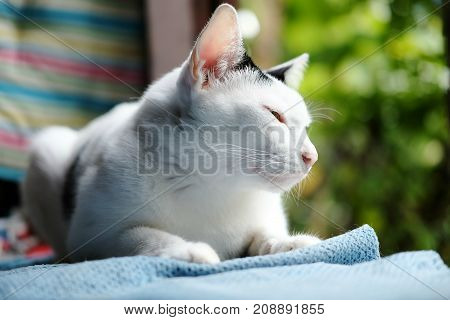 A cute black and white cat sitting on the window