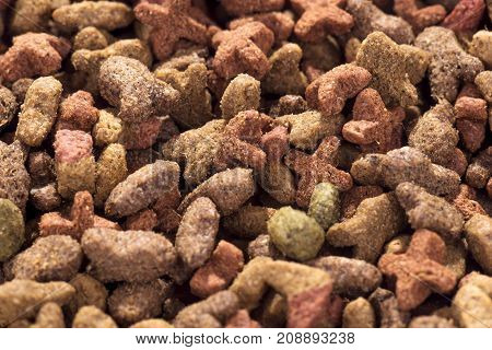 Colorful dry cat dog food in granules as background