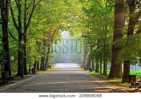 Summer morning urban landscape. Beautiful alley among the trees in the castle park in Pszczyna Poland.