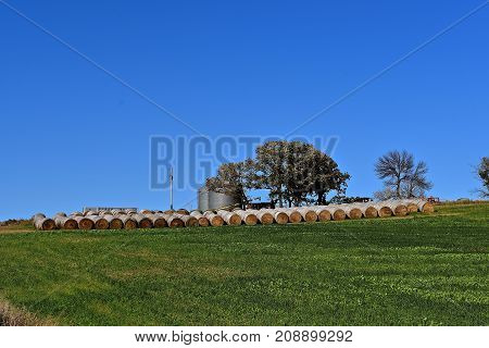 Long rows of round hay bales spread across a field