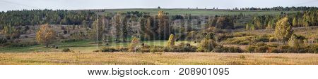 Panorama of the autumn forest with clearings with hay
