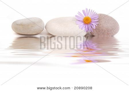 stones with violet flower