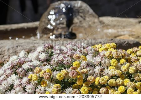 Small pink and yellow flowers and a garden fountain behind them