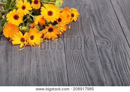Calendula officinalis. Marigold flower with leaf on black wooden background with copy space for your text.