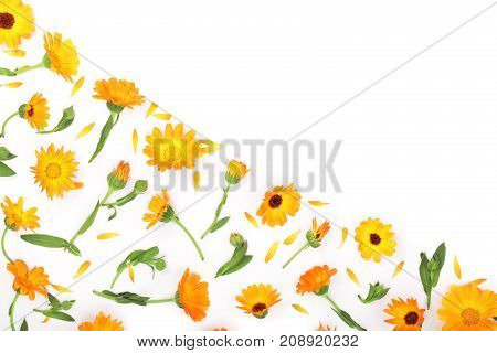Calendula. Marigold flower with leaf isolated on white background. Corner with copy space for your text. Top view.