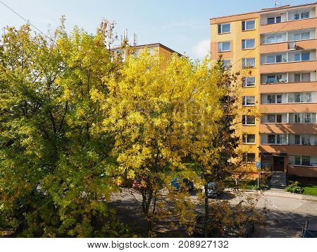 Colorful trees between block of flats Czech republic city of Olomouc.