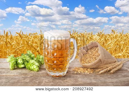 mug of beer with foam, fresh green hops, ears and grains of barley on table against golden field and blue sky. Light beer with summer landscape. Brewing concept