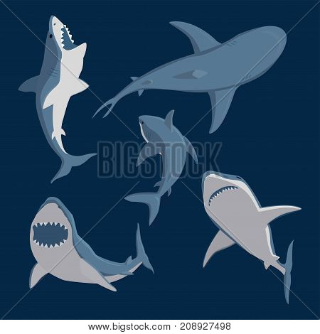 Vector illustration toothy white swimming angry shark. Animal sea fish character underwater cute marine wildlife mascot. Scary smile cool evil monster shark character funny predator.