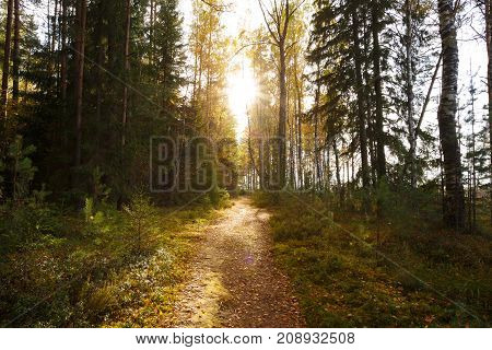 Sun shining over road, path, walkway through forest. Sunset Sunrise In Autumn Forest Trees.