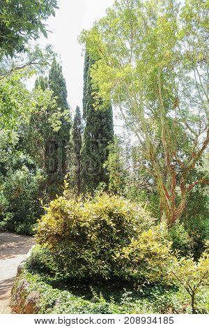Bushes and trees of the botanical garden. Lush vegetation of the Nikitsky Botanical Garden in the Crimea.