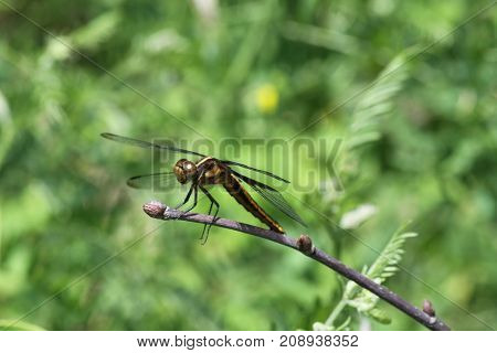 Dragonfly perched on a tree branch in a small field.