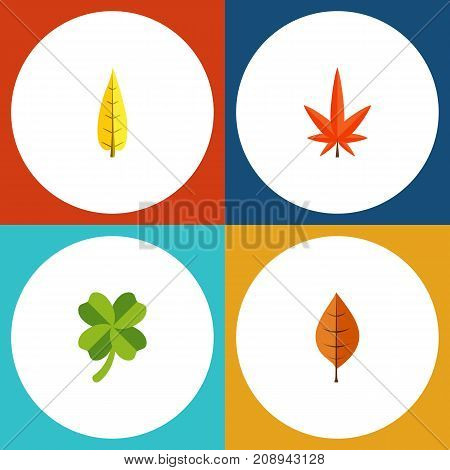 Flat Icon Maple Set Of Aspen, Leafage, Maple And Other Vector Objects