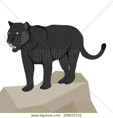 Panther on stone, a predator. Flat design, vector illustration, vector.