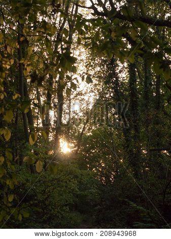 Light Setting Shining Through Trees Blur Nature Leaves Autumn