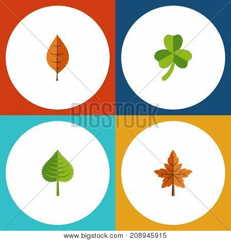 Flat Icon Leaf Set Of Alder, Foliage, Leaf And Other Vector Objects