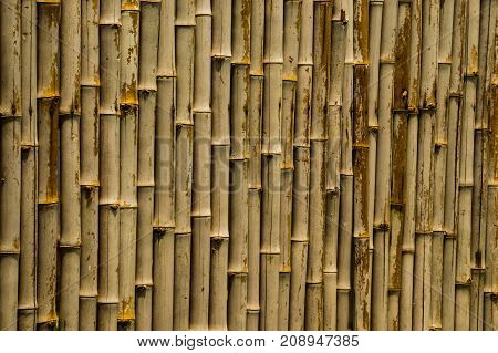 Bamboo Natural Born and Bamboo Fence Background.
