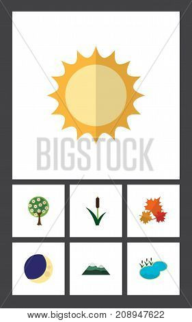Flat Icon Nature Set Of Tree, Canadian, Cattail And Other Vector Objects