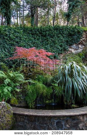 Landscaping of a rock wall holding a pond and going up a hillside with plants and trees in fall.