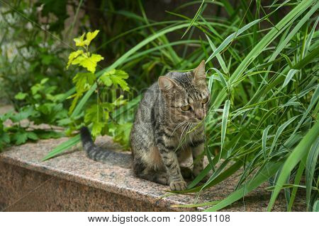 Adorable tabby cat outdoors