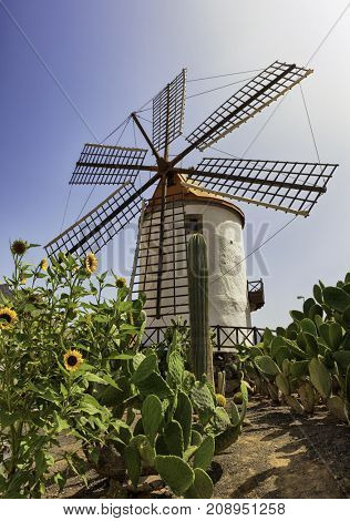 Restored windmill near Mogan, Grand Canary with cacti and sunflowers in the garden