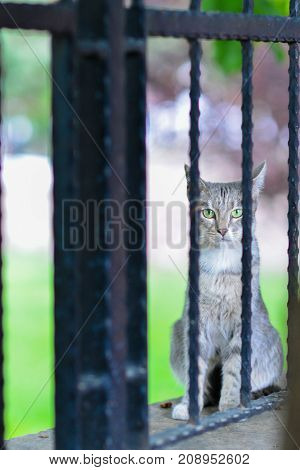 stray cat behind the fence