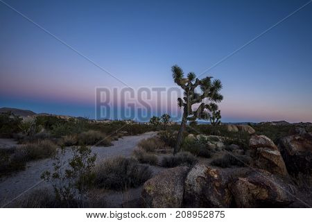 A pastel sunset in the Mojave Desert with a Joshua Tree silhouetted against a pink and blue dusk sky.  Shot in Joshua Tree National Park.
