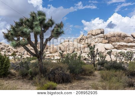A large Joshua Tree frames the rugged rock formations surrounding the desert landscape.