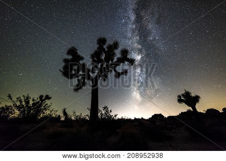 The night sky peppered with thousands of stars and the beautiful Milky Way, which hangs vertically over a Joshua Tree in in the Mojave desert.