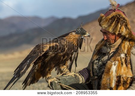 SAGSAY, MONGOLIA - SEP 28, 2017: Kazakh Eagle Hunter in traditional clothing, while hunting the hare holding a golden eagle on his arm in desert mountain of Western Mongolia.