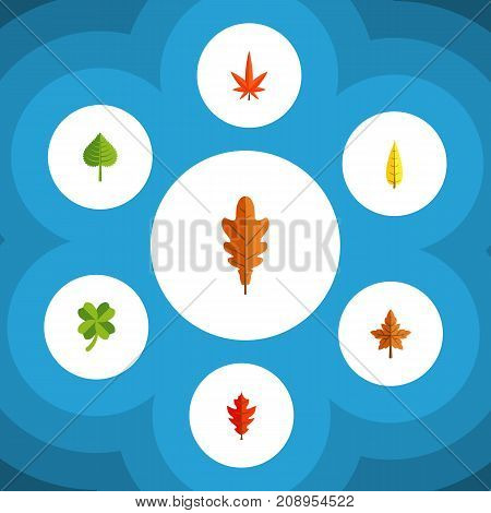 Flat Icon Leaves Set Of Hickory, Leafage, Linden And Other Vector Objects