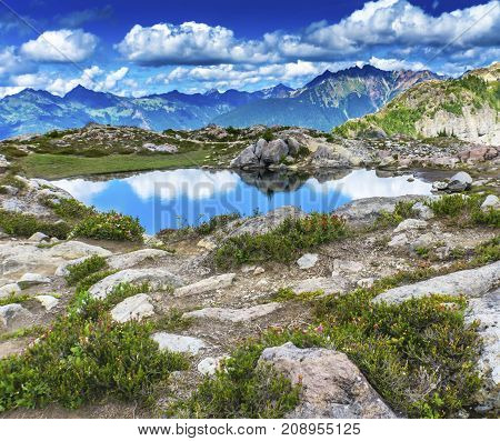 Pool Pond Reflection Summer Artist Point Mount Baker Highway Pacific Northwest Washington State Snow Mountain Grass Trees