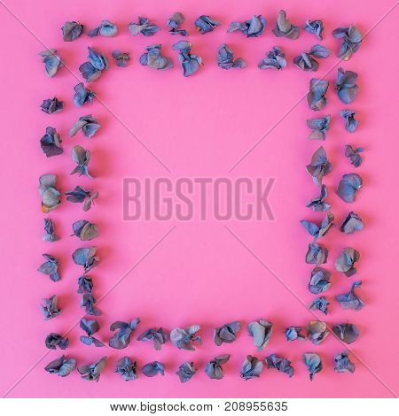 Dry flowers with frame on pink background. Flat lay, Top view