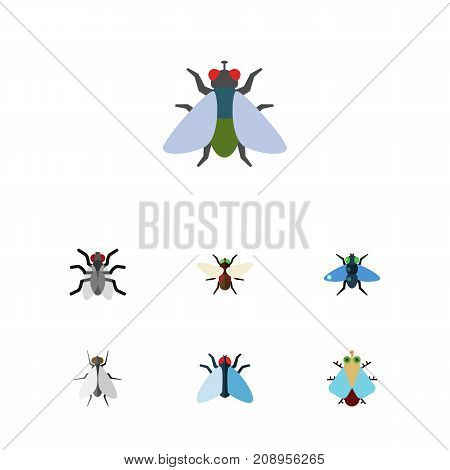 Flat Icon Fly Set Of Fly, Tiny, Dung And Other Vector Objects