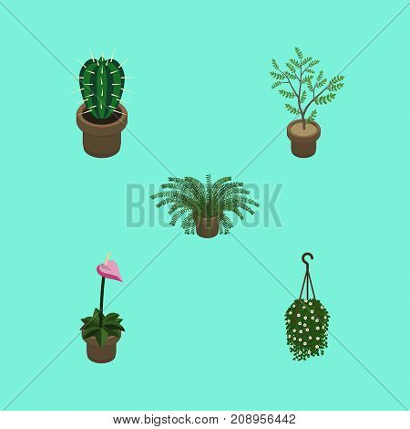 Isometric Houseplant Set Of Plant, Grower, Fern And Other Vector Objects